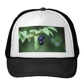 Black berried honeysuckle (Lonicera nigra) Trucker Hat