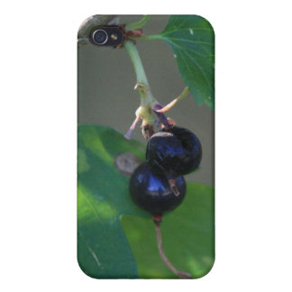 Black Berries 4/4s iPhone 4/4S Cases