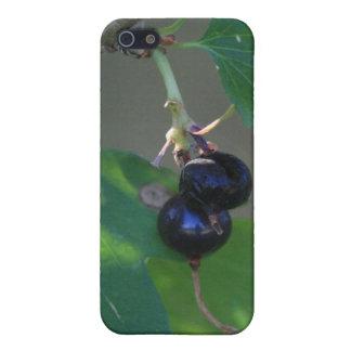 Black Berries Iphone 4/4s Speck Case