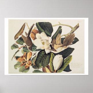 Black-billed Cuckoo on Magnolia Grandiflora, 1828, Poster