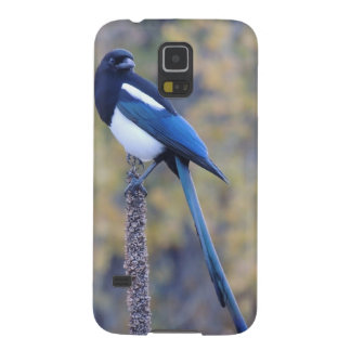 Black Billed Magpie Galaxy S5 Cover