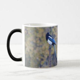 Black Billed Magpie Mugs
