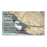 Black-billed magpie stands on rock business card template
