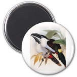 Black-billed Mountain Toucan Magnet