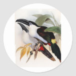 Black-billed Mountain Toucan Round Sticker