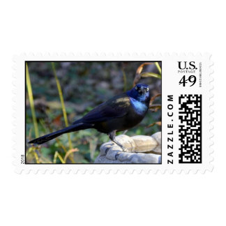 Black bird at birdbath postage stamps