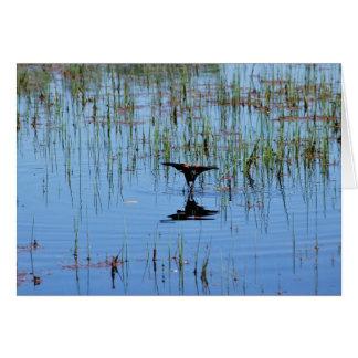 Black Bird Balancing Act Card