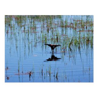 Black Bird Balancing Act Postcard