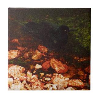 """""""Black Bird Bathing"""" - Tile"""