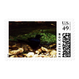 """Black Bird by the Creek"" - Postage"