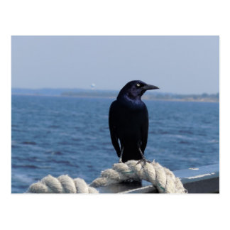 Black Bird on the Ferry Postcard