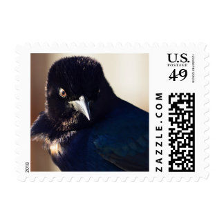 Black Bird Postage Stamps