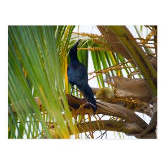 Black bird postcard
