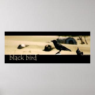 Black Bird Posters