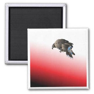 Black bird predator aggressive hawk magnet