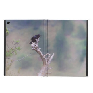 Black bird singing iPad air case