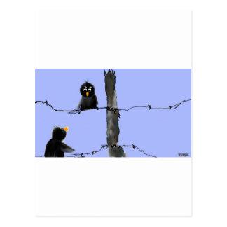 Black Birds Postcards