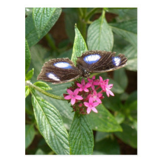 Black Blue Butterfly Pink Fower Post Cards