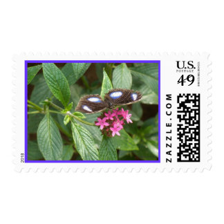 Black Blue Butterfly Pink Fower Postage Stamp