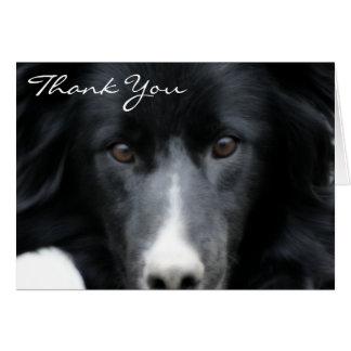 Black Border Collie Face Dog Thank You Card