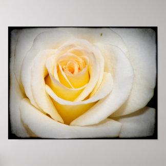 Black Border White Rose Posters