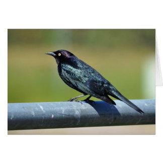 Black Bower Bird Card