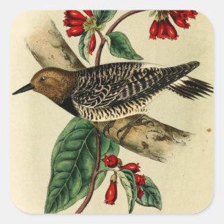 Black Breasted Woodpecker Square Sticker