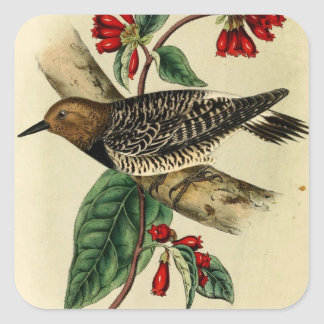 Black Breasted Woodpecker Square Stickers