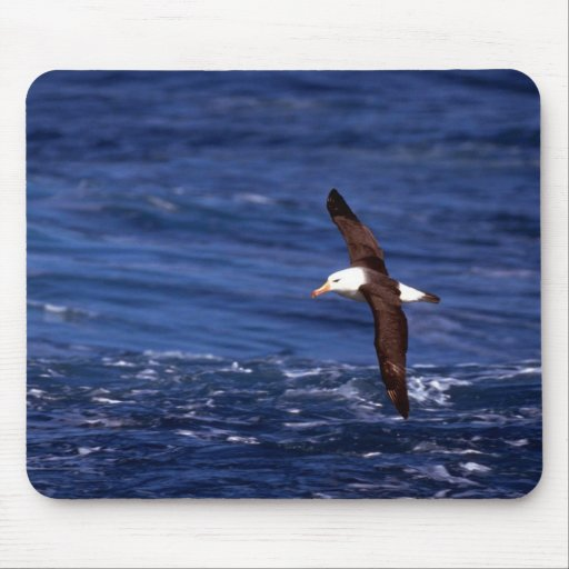 Black-Browed Albatross In Flight Mousepad