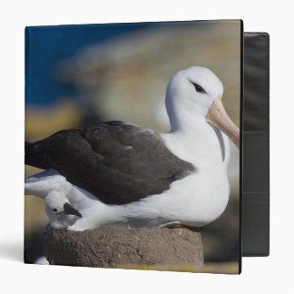 Black-browed Albatross Thalassarche 3 Ring Binder