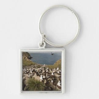 Black-browed Albatross, Thalassarche Keychain