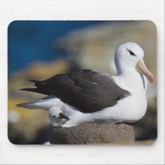 Black-browed Albatross Thalassarche Mouse Pad
