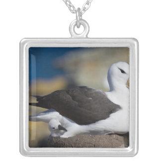 Black-browed Albatross Thalassarche Square Pendant Necklace