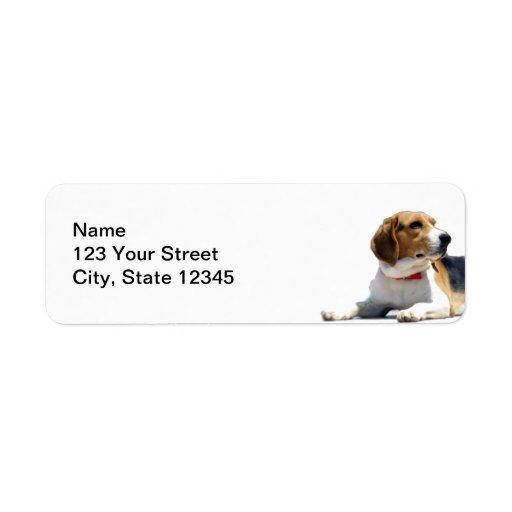 Black Brown and White Beagle Dog Return Address Return Address Labels