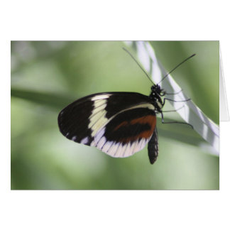 Black Brown and White Butterfly Blank Card