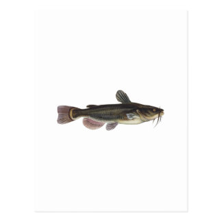 Black Bullhead Catfish Art Postcard