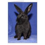 Black bunny rabbit greeting card