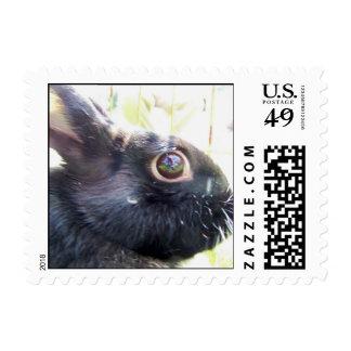 Black Bunny US Postage Stamps