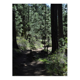 Black Butte Trail Postcard