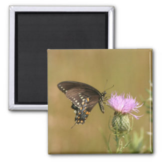 Black Butterfly 2 Inch Square Magnet