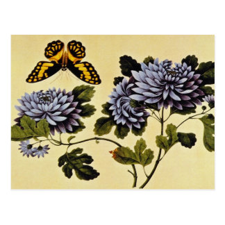 Black Butterfly and Dahlias, unknown artist flower Postcard