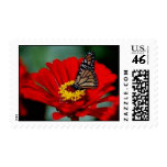 Black Butterfly in Red Flower Postage