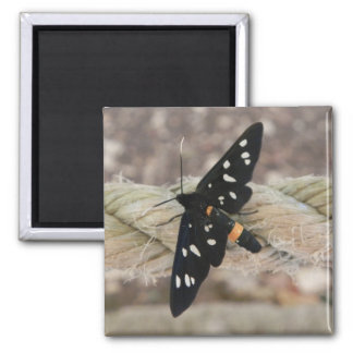 black butterfly magnet