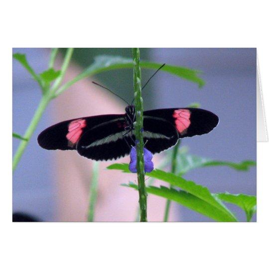 Black Butterfly on blue flower Card