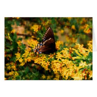Black Butterfly on Clove Bush Card