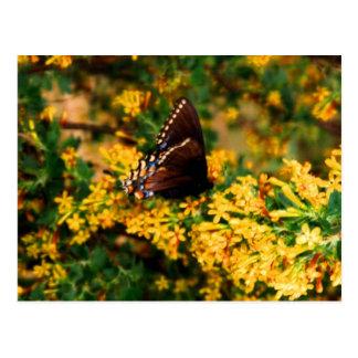 Black Butterfly on Clove Bush Postcard