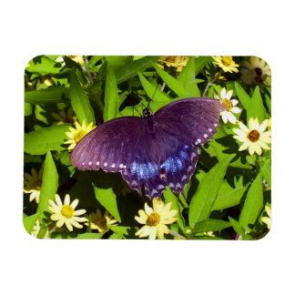 Black Butterfly On Flowers Magnet