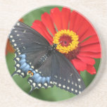 Black Butterfly on Red Zinnia Flower Coasters