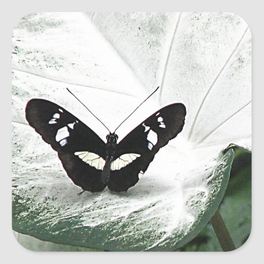 Black Butterfly on White Caladium Leaf Square Sticker