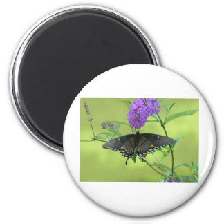 Black Butterfly Templete Items Magnets